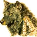 Jó farkas verseny